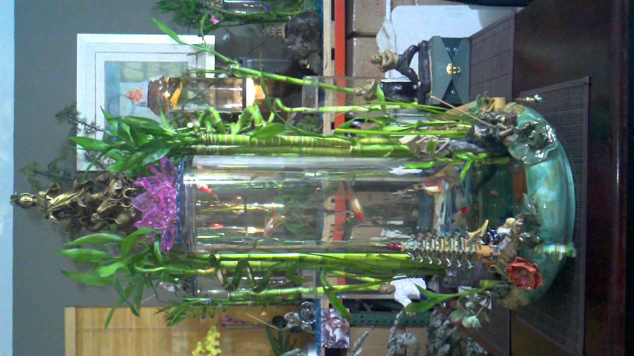 The Most Beautiful Lucky Bamboo Aquarium Youtube