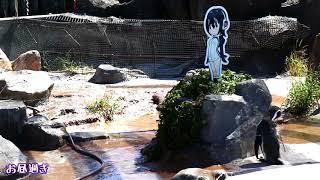 【東武動物公園】フルルパネルがしまわれた次の日のグレープ君