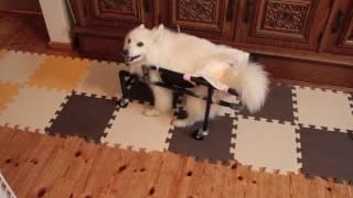 ななのために作っている手作り車椅子 どうしても逆走してしまいます.