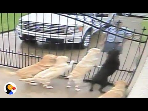 Mailman CAUGHT LOVING DOGS | The Dodo