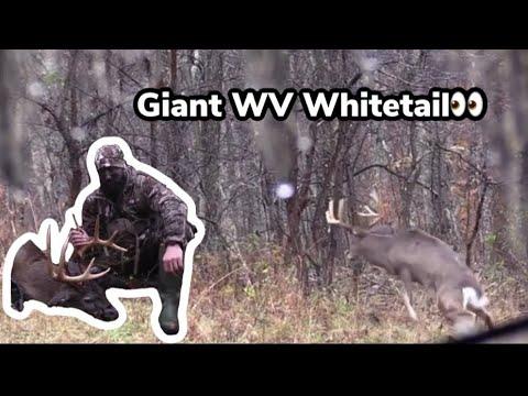 West Virginia Self Filmed Whitetail