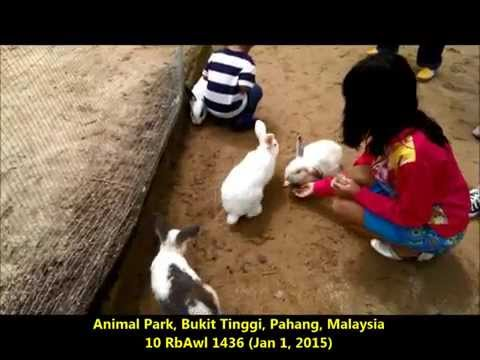 10 RbAwl 1436 Jan 1, 2015 Animal Park, Bukit Tinggi, Pahang, Malaysia