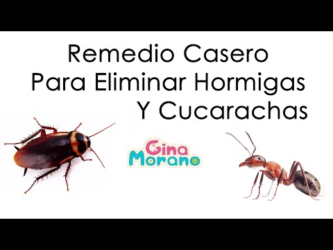 Full download como eliminar cucarachas y huevos de - Remedios caseros para eliminar hormigas en casa ...