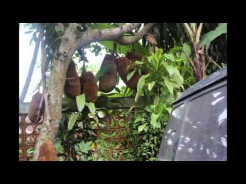 توثيق رحلة اندونيسيا يناير ٢٠١٥