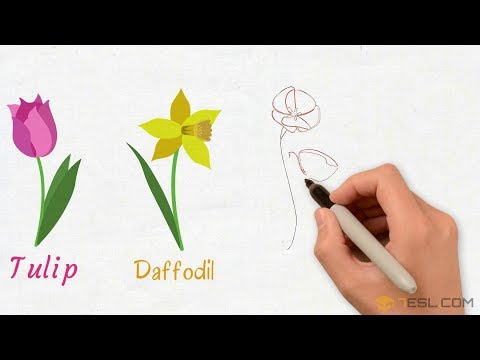 List Of Flowers: Names Of Flowers With Images