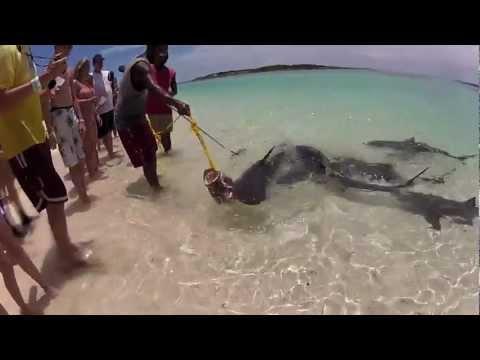 Bahamas Shark Feeding - Exuma Cay's