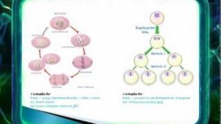 ELPREICFES - Biología  4. Mitosis y meiosis.wmv