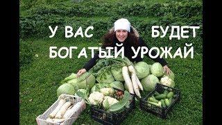 Богатый урожай с саду, на даче и в огороде!  Урожайный огород на Урал Даче и уютный дом!
