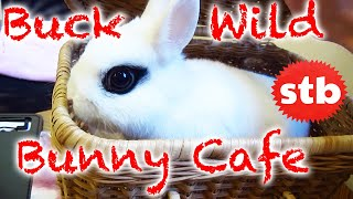 Bunny Rabbit Cafe in Japan ★ SoloTravelBlog