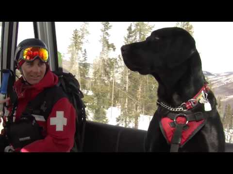 Adolescent Avys: The Dogs of Vail Mountain