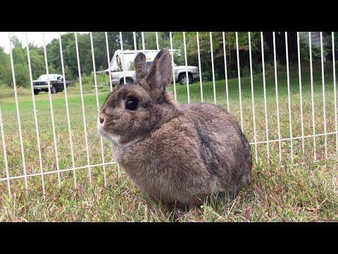 Bunny, Why Do I Love You? - Parry Gripp