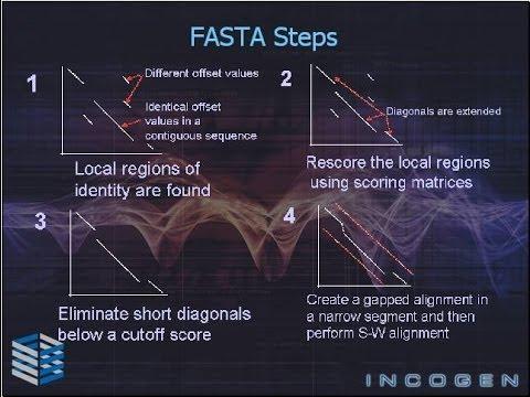 Bioinformatics part 5 FASTA algorithm