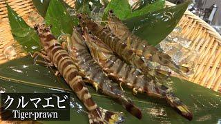 クルマエビの握り寿司と刺身~Making sushi of Japanese tiger prawn~