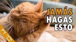 TOP 15 Cosas Que NO DEBES HACER Con Tu Gato | Cosas Que Los Gatos Odian De Las Personas