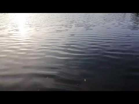 beautiful-nature-healing-meditation-music-|-instant-calming-frequencies-|-relaxation-sleep-hypnosis