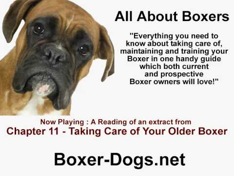 Your older Boxer Dog - Old Age Boxer Dog Care Tips - YouTube