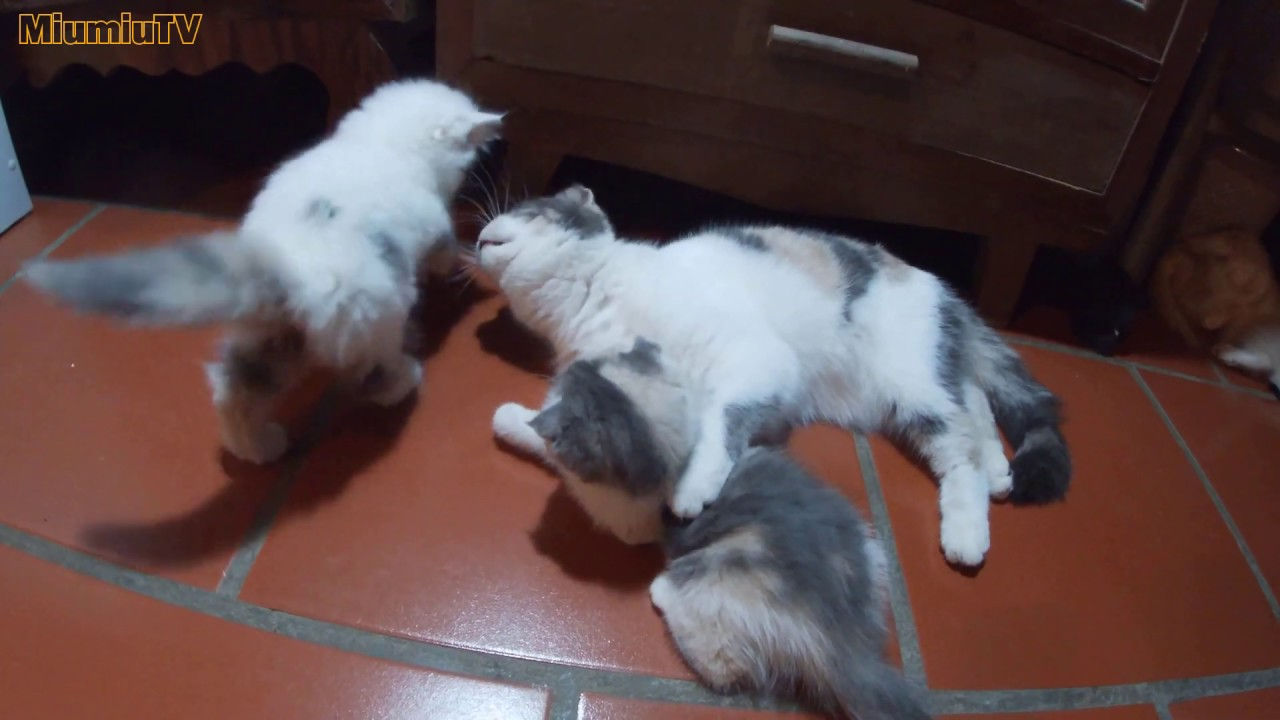 Cat sisters hug each other affectionately