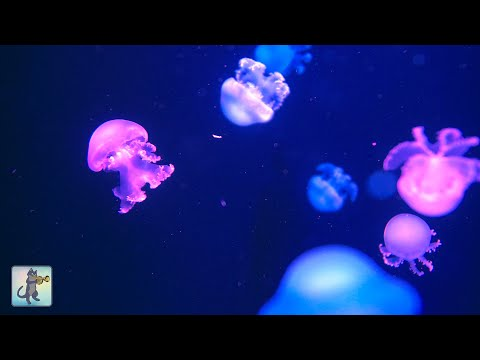 Soothing Jellyfish Aquarium ~ Relaxing Music For Sleep, Study, Meditation & Yoga