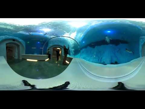 360 view of new Polk Penguin Conservation Center at Detroit Zoo