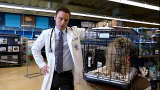 Pet Time: Dog Crate Tips