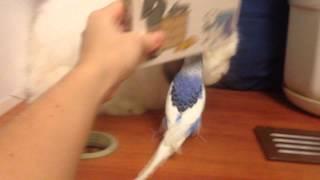 Лизун и Ароша(Ароша очень злится когда его не пускают к кролику:))), 2015-02-28T13:07:12.000Z)