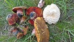 Pilze Anfang Juni