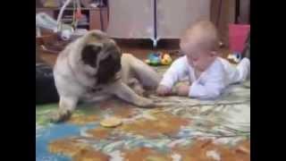 Маленький ребёнок с собакой делят печенье