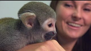 Woman reunited with pet monkey after man puts it in fake Miami sanctuary