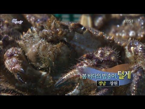 [6시내고향-창원] 봄 바다의 밤송이, 털게 - 경남 창원 (2017.03.13,월)