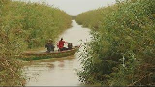 Mauritanie : le typha, catastrophe écologique, se transforme en petit miracle