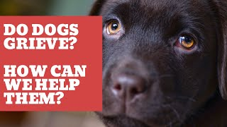 How can I help my dog grieve?