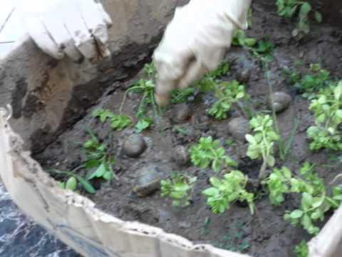 Proyecto de caracoles youtube for Caracoles de jardin como eliminarlos
