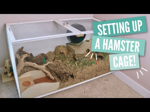 How To Setup A Hamster Cage