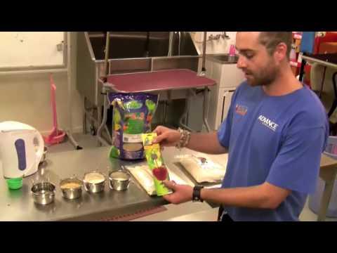 7 tips on feeding your lorikeet