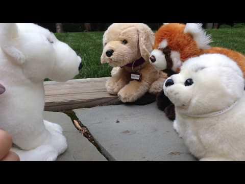 Weak~Webkinz Music Video~Ft. EspeonAndMew's new Sig Chase, The Bull Terrier
