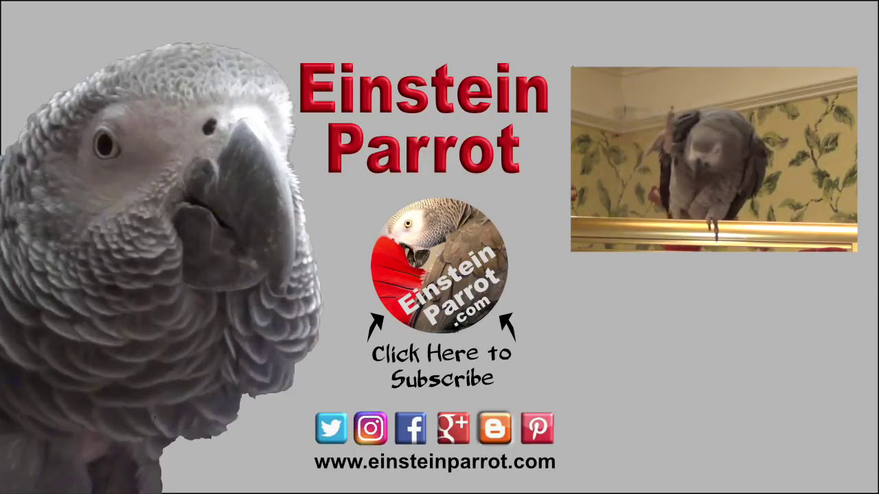 Einstein Parrot Creates New Meaning To The Phrase