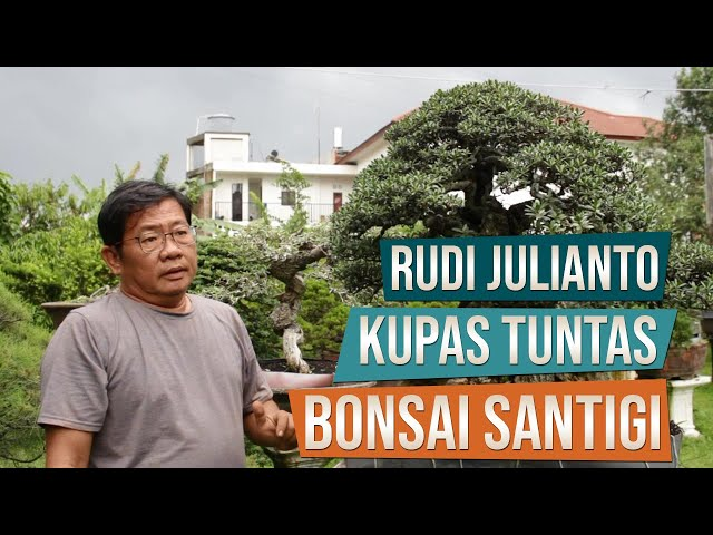 Kupas Tuntas Bonsai Santigi Bersama Pak Rudi Julainto