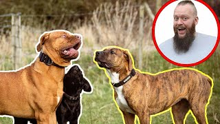 One Trick That Will Help You Have The PERFECT Dog!