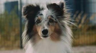 Suomen Kennelliitto - Hyvää elämää koiran kanssa 2019
