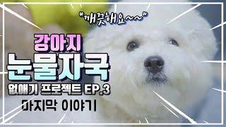 강아지 눈물자국 없애기 프로젝트 EP3  | 반려견 눈물에 도움되는 강아지 용품 후기 |비숑 | 푸들 |