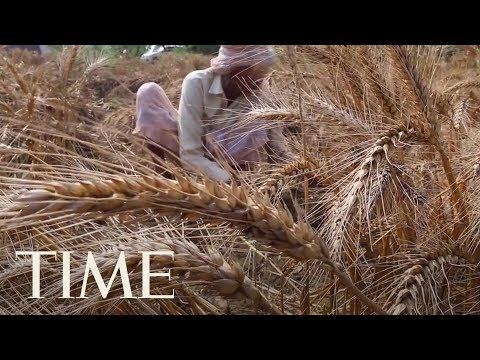 Farmer Suicides Rise In India As Climate Change Takes Its Toll And Farmer's Clout Diminishes | TIME