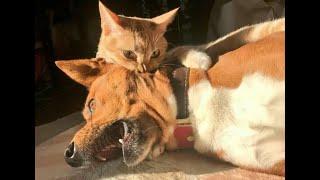 Кусает значит любит Подборка приколов с котами и собаками для хорошего настроения