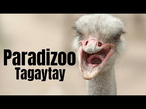 Amazing trip to Paradizoo at Upper Tagaytay (Mendez Cavite) - part 1