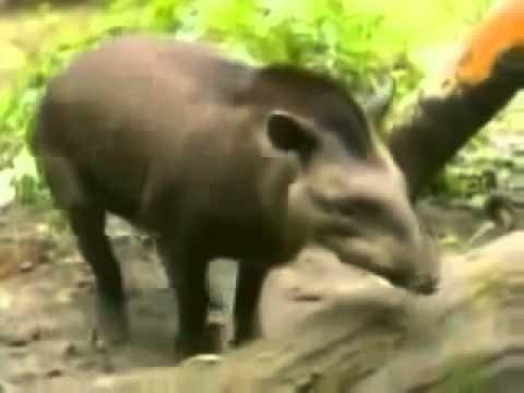 Клуб Зоофилы - Видео животных beastiality, секс с животными