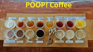 Luwak Coffee Plantation in Ubud Bali Indonesia - We sample expensive cat poop coffee
