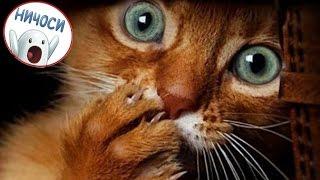 Смешное видео про котэ! Забавные смешные кошки. Ничоси!