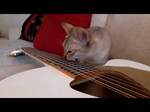 IngLid the Guitar Playing Cat