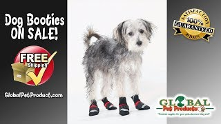 dog shoes available now dog shoes