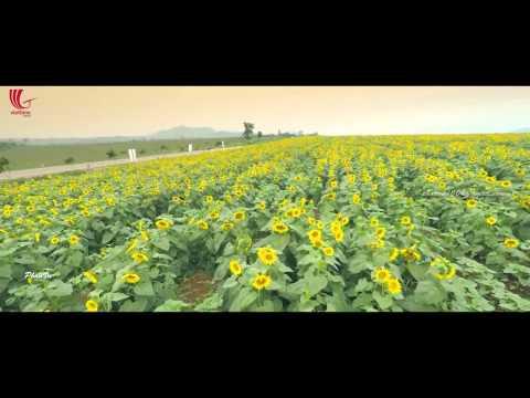 Cánh đồng hoa hướng dương - Nghệ An | Viettime Travel