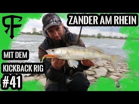Zander Schlag auf Schlag Livebisse am Rhein mit dem Dropshot-Rig und Kickback-Rig#Livebisse #13